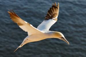 Gut abgebildeter Vogel