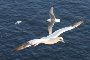 Zweiter Vogel ins Bild geflogen